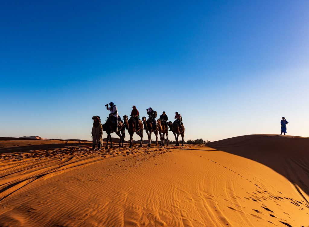 Camels in the desert Morocco Team Incentive Trip Destination
